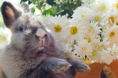 Lapin parmi les fleurs Photos stock