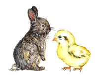 Lapin pelucheux gris de lièvres et petit poussin jaune Images libres de droits