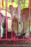 Lapin rayé blanc dans une cage Image libre de droits
