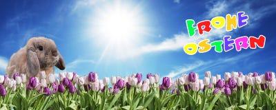 Lapin rose et tulipe blanche sur le ciel ensoleillé bleu de prairie saluant l'Allemand oriental heureux des textes Images stock