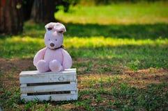 Lapin rose se reposant sur la boîte en bois photos stock