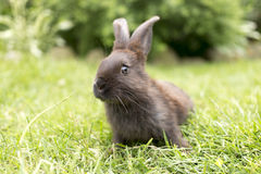 Lapin se reposant sur l'herbe au cours de la journée lièvres à la maison se reposant dessus Images stock