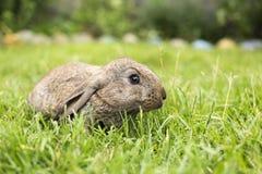 Lapin se reposant sur l'herbe au cours de la journée lièvres à la maison se reposant dessus images libres de droits