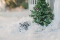 Lapin sous l'arbre dans la neige Images libres de droits