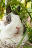Lapin sous un buisson Photographie stock