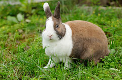 Lapin sur l'herbe Photos stock