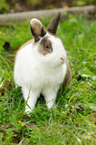 Lapin sur l'herbe Image stock