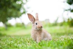 Lapin sur l'herbe photos stock