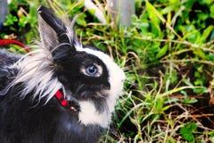 Lapin sur l'herbe lapin Photo libre de droits