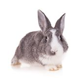 Lapin sur le fond blanc Photos stock