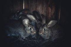 lapins photos libres de droits