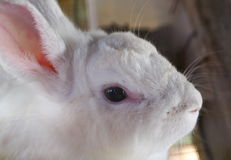 lapins Photographie stock libre de droits