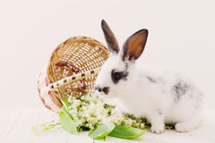 lapins avec des fleurs de ressort Photo stock