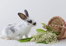 lapins avec des fleurs de ressort Photographie stock libre de droits