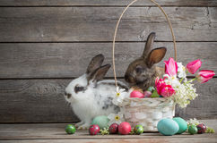 lapins avec des fleurs de ressort et des oeufs de pâques Photo libre de droits