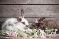 lapins avec des fleurs sur le fond en bois Photo libre de droits