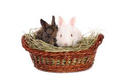 Lapins blancs et gris de chéri dans un panier Photos stock