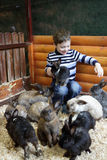 Lapins d'alimentation des enfants Photos libres de droits
