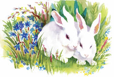 Lapins d'aquarelle dans l'illustration de vecteur d'herbe verte Photographie stock libre de droits