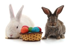 Lapins de Pâques avec les oeufs colorés Photos libres de droits