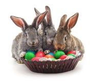 Lapins de Pâques avec les oeufs colorés Photo libre de droits