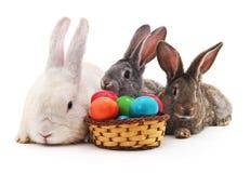 Lapins de Pâques avec les oeufs colorés Images stock
