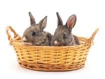 Lapins de Pâques dans le panier Images stock