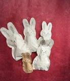 Lapins de Pâques de papier sur le fond rouge Photo libre de droits