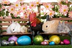 Lapins de Pâques et coq Photos libres de droits