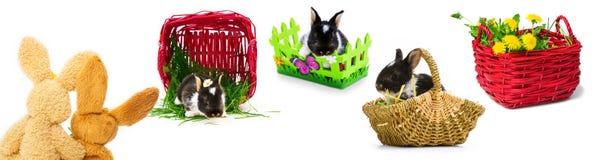 Lapins de Pâques, paniers de Pâques, Pâques Photo stock