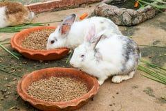 Lapins mangeant de la nourriture de lapin Photographie stock
