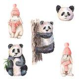 Lapins mignons et pandas d'aquarelle peinte à la main d'isolement sur le fond blanc Images libres de droits