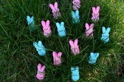 Lapins roses et bleus de guimauve de Pâques dans l'herbe Photo libre de droits