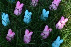 Lapins roses et bleus de guimauve de Pâques dans l'herbe Image libre de droits