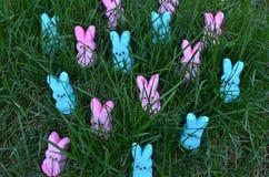 Lapins roses et bleus de guimauve de Pâques dans l'herbe verte Image libre de droits