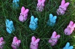 Lapins roses et bleus de guimauve de Pâques dans l'herbe verte Photographie stock