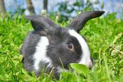 Lapins sur l'herbe verte Photo stock
