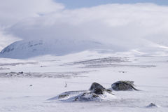 Lapland. Mountain full of snow during winter, Jamtlands region, north of Sweden stock images