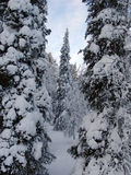 Lapland. Snow-covered trees in Lapland at the end of the polar winter royalty free stock photography