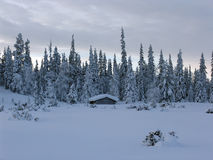 Lapland. Snow-covered trees and the river in Lapland at the end of the polar winter (panoramic view stock image