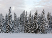 Lapland Royalty Free Stock Photos