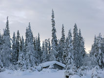 Lapland. Snow-covered trees and the river in Lapland at the end of the polar winter (panoramic view royalty free stock photos