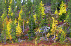 Lapland in autumn Stock Images