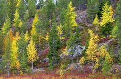 Lapland in autumn Stock Images