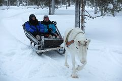 Reindeer sleigh ride through snow in Lapland, Finland Royalty Free Stock Image