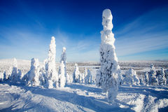 Lapland Finland Stock Images