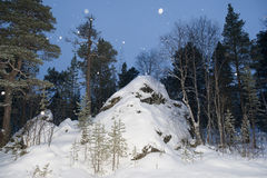 Lapland forest in winter Royalty Free Stock Images