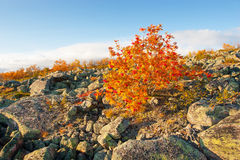 Lapland highlands  in autumn Royalty Free Stock Photography