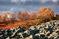 Lapland highlands in autumn Stock Photography