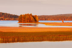 Lapland landscape in autumn Royalty Free Stock Photography